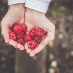 Recipe's for Summer - Raspberries