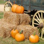 pumpkins-and-hay-at-the-base-of-a-wagon